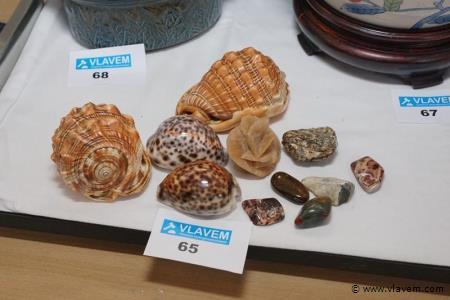 Sierstenen en schelpen
