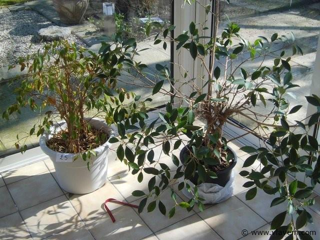 2x planten